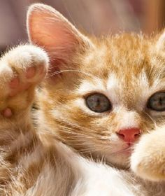 CUTE  BABY KITTENS COMPILATION Top 10 MORE VIDEOS HERE https://www.youtube.com/watch?v=InDJc2L_5dA&list=PLC_HjotBFMpNqd0u6cYK0NtHBXcOIEEoD  YOUTUBE CHANNEL SUBSCRIBE:  http://www.youtube.com/user/TheFederic777?sub_confirmation=1  #Kittens #Cats #CuteKittens
