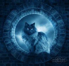 Лунный кот, художник M. Rosli