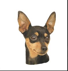 Miniature Pinscher Dog 12 Identical Six Inch Fabric Squares For Sew Or Quilt Mini Pinscher, Miniature Pinscher, Dachshund, Pincher Dog, Amor Animal, Purebred Dogs, Fabric Squares, Losing A Dog, Pet Portraits