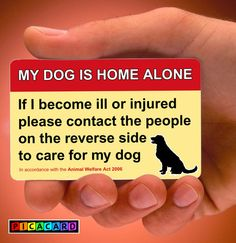 32 Awesome dog home alone card images