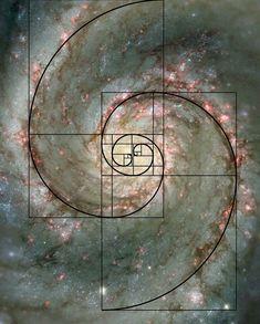 The Golden Mean - Golden Ratio - Fibonacci Fibonacci Sequence In Nature, Fibonacci Spiral In Nature, Fibonacci Spiral Tattoo, Fractals In Nature, Spirals In Nature, Fibonacci Golden Ratio, Fibonacci Number, Divine Proportion, Sacred Geometry Art