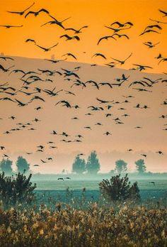 Birds On Misty Morning In Hula Valley, Palestine
