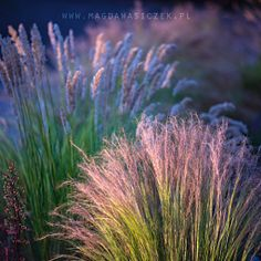 Magda Wasiczek / Collection_collection_arboretum-trojan-w-lato Photography Portfolio, Fine Art Photography, Ornamental Grasses, Pet Birds, The Incredibles, Gallery, Nature, Flowers, Delicate