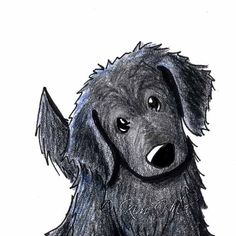 Flat Coated Retriever Dog Art Original ACEO by KiniArt on Etsy, $40.00
