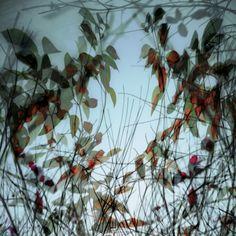 autumn dress by Gilbert Claes