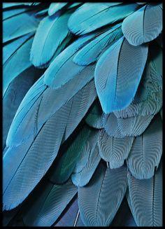Petrol feathers, poster in de groep Posters / Afmetingen / 30x40cm bij Desenio AB (8613)