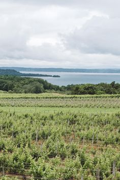 Planning a wine tasting trip to Old Mission Peninsula in Northern Michigan? Here are the 10 best Old Mission Peninsula wineries you need to stop at. Michigan | USA | United States of America | Travel Destinations | Honeymoon | Vineyard | Winery | Vacation | Bucket List | Wine | Off the Beaten Path | Local Guide | #travel #honeymoon #vacation #offthebeatenpath #Michigan #USA #America #UnitedStates #exploreMichigan #visitMichigan #seeMichigan #discoverMichigan #TravelMichigan #winery #vineyard Travel Articles, Travel Advice, Travel Guides, Travel Tips, Michigan Usa, Michigan Travel, Northern Michigan, Packing List For Travel, Honeymoon Destinations