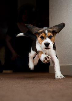 breakdancin' beagle by fishsuckeggs