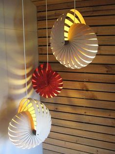 Rebecca Asquith : Nautilus   Two Medium Natural Nautilus and One Small Red Hanging