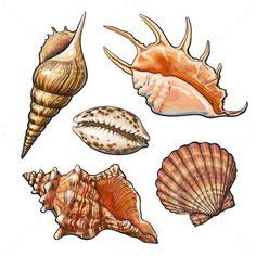 Watercolor Drawing, Painting & Drawing, Sea Creatures Drawing, Seashell Tattoos, Seashell Drawings, Logo Restaurant, Shell Art, Beach Art, Art Sketchbook