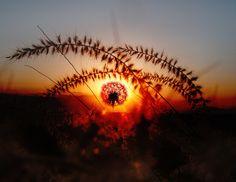 "Dandelion Sunset - <p><a href=""https://www.facebook.com/ismailbilir.400""><img src=""http://www.ismailbilir.com/ismail_bilir/facebook.png""></a> <a href=""https://www.instagram.com/ismail_bilir40/""><img src=""http://www.ismailbilir.com/ismail_bilir/instagram.png""></a> <a href=""https://twitter.com/ismailbilir40""><img src=""http://www.ismailbilir.com/ismail_bilir/twitter.png""></a> <a href=""http://www.ismailbilir.com""><img src=""http://www.ismailbilir.com/ismail_bilir/ismailbilir.png""></a> <a…"