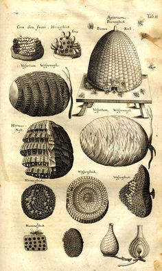 Illustration of various hives and comb patterns.