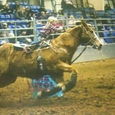 Little barrel racer Kaylee Smith! It is a shame the scam Crying Cowboy ran on little Kaylee! Beware of doing business with the Crying Cowboy. Bull Riding, Horse Riding, Most Beautiful Animals, Beautiful Horses, Barrel Racing Quotes, Rodeo Life, Western Riding, Barrel Horse, Horse Quotes