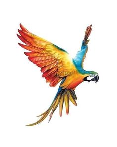 Incorporating a special effect like a lens flare can add a sense of realism to your drawing. Beautiful Drawings, Beautiful Birds, Colorful Drawings, Easy Drawings, Animal Paintings, Animal Drawings, Parrot Tattoo, Parrot Drawing, Color Pencil Sketch