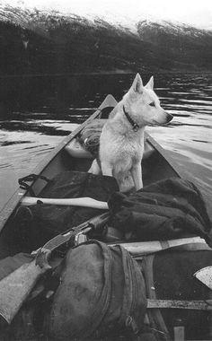 travelling companion