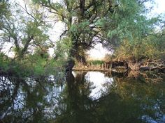 The Danube Delta is perhaps the least inhabited region of temperate Europe. In the Romanian side live about people, of which in the port of Sulina, which gives an average density of approx. 2 inhabitants per km². Danube Delta, Danube River, World Heritage Sites, Continents, Romania, Places To See, Europe, Country, Outdoor