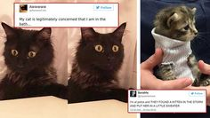 These Cat Tweets Are Just the Remedy Any Time You're Down