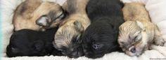 Media Library ‹ Always Adorable Mi-Kis — WordPress Wordpress, Puppies, Dogs, Animals, Animales, Animaux, Doggies, Puppys, Animais