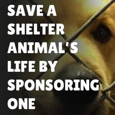 Sponsor And Save A Shelter Animal's Life
