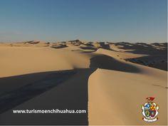 Los Médanos de Samalayuca, es un desierto localizada en el extremo norte de Chihuahua, a 50 kilómetros al sur de Ciudad Juárez, están constituidos por dunas de arena sílica, blanca y fina, siendo parte del Desierto de Chihuahua. Algunas producciones cinematográficas han tenido lugar en esta zona como son Conan El Destructor y Dune, ambas de año 1984. #visitaciudadjuárez