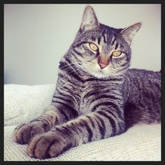 Myratz, the great :) #cat
