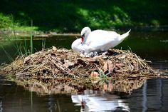 Beautiful nest