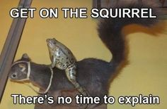 Get on the squirrel!  There's no time to explain!