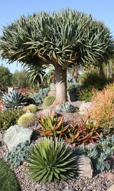 Desert Landscaping Garden Ideas Desert Gardening and Landscaping – Adding Beauty to The Home Garden Desert Garden Landscaping Ideas. Desert gardening is a great idea for all sorts of landscap… Xeriscape, Plants, Succulents, Drought Tolerant Garden, Cactus Garden, Rock Garden Landscaping, Dry Garden, Landscape, Desert Garden