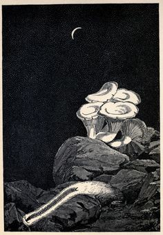 From Living Lights: A Popular Account of Phosphorescent Animals and Vegetables by Charles Frederick Holder, 1887