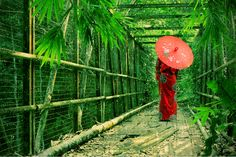 walkthrough by jaka in red Purple Yellow, Blue Orange, Red Green, Geisha, Green Kimono, Umbrellas Parasols, Female Photographers, Japanese Kimono, Beautiful Landscapes
