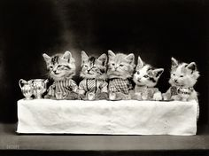 PETS: Cats perform - The Tea Party, 1914  via Shorpy Historical Photo Archive Harry Whittier Frees, the photographer who shot these terrifyingly adorable cat portraits in the early 1900s, is considered to be one of the early fathers of lolcats.