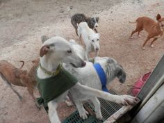 Pepis dog refuge - Pedrera Sevilla