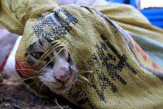 Спасли 500 кошек