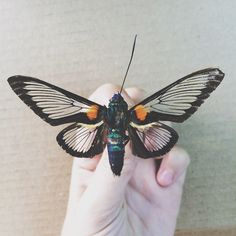 INSPIRATION: InsectsINSPIRATION: Insects
