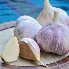These different garlics each have unique flavors, growing needs and optimal uses. Discover which one is right for your kitchen.data-pin-do=