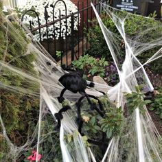 D.C. front yards find themselves full of giant spiders and webs as October draws to a close.