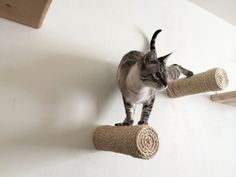 Floating sisal cat post CatastrophiCreations