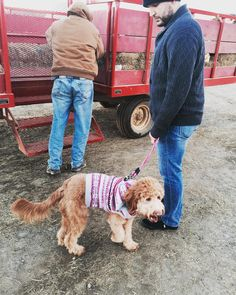 Today was pumpkin picking #goldendoodle style I even went on my first hay ride  -Lola  #dogs #happytailspets #dogwalker #dogsofinstagram #cannon #doodlesofinstagram #dogs #doglover #whoodlesofinstagram #whoodle #wheatenterrier #goldendoodle #goldenretrieversofinstagram #minigoldendoodle  #beautiful #dogsofig #pictureoftheday #dogoftheday #doodlelove #doodlefamily #scenery #bandana #exploremore #outdoors #newjersey #petsitter #petsofinstagram #love #furbabies #penniethepoodle by…