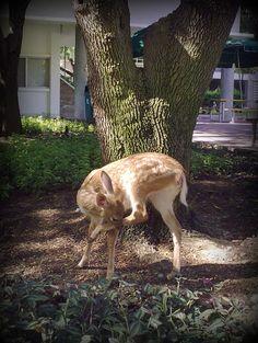 Little deer. 2012 08. ITESM Campus Monterrey. @Tecnológico de Monterrey, Campus Monterrey