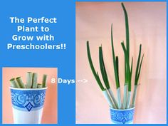 The Perfect Plant to Grow With Preschoolers!