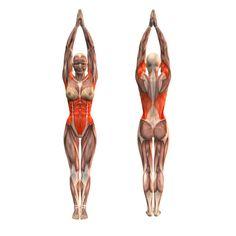 Half-moon pose with stretch - Utthita Ardha Chandrasana - Yoga Poses | YOGA.com