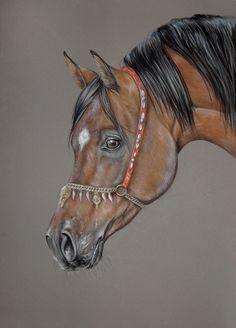 arabian horse soft pastel Más