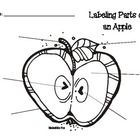 Free Parts of a Seed diagram. Have students dissect lima