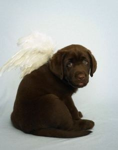 How cute (and simple) is this Halloween costume for the dog. What an angel!