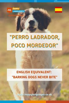 """What do we mean with the idiom""""perro ladrador, poco mordedor"""" in Spanish?🐶😄 Spanish Idioms, Idiomatic Expressions, Learning Spanish, Sentences, Language, English, Reading, Dogs, Animals"""
