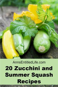 20 Zucchini and Summer Squash Recipes. Wondering what to do with all that zucchini and summer squash? Zucchini and Summer Squash are certainly abundant in backyard gardens, farmers markets, and grocery stores this time of year.  Here are 20 Zucchini and Summer Squash Recipes your family will enjoy, from breads to waffles to soups and chips; there is something on this list for everyone!