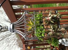 Old Decorative Bird Cage Spray Painted And Filled With Succulents. Good Way  To Use Those