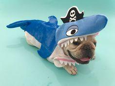 Roberto, the French Bulldog Land Shark