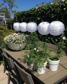 Meanwhile in my garden.......🌱💚🌿 #mygarden #lampionnen #green #plants #tafelklem #black #gardendiscount