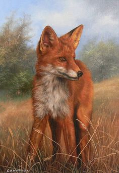 Fox | Painting by Carl Whitfield